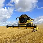 Yellow tractor, combine, harvesting wheat